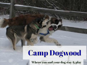 Camp Dogwood