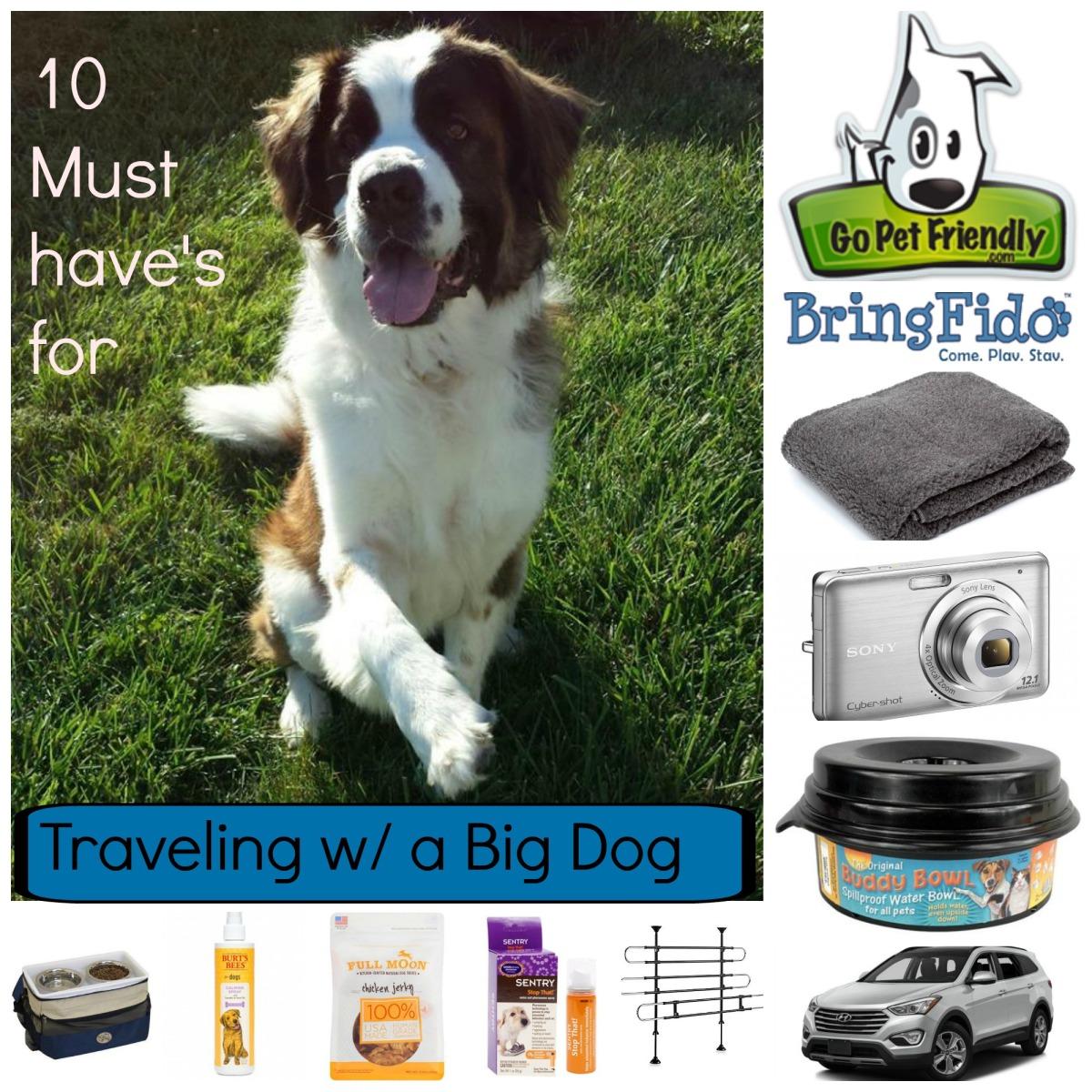 Traveling W/ A Big Dog
