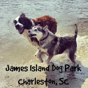 jamesislanddogpark