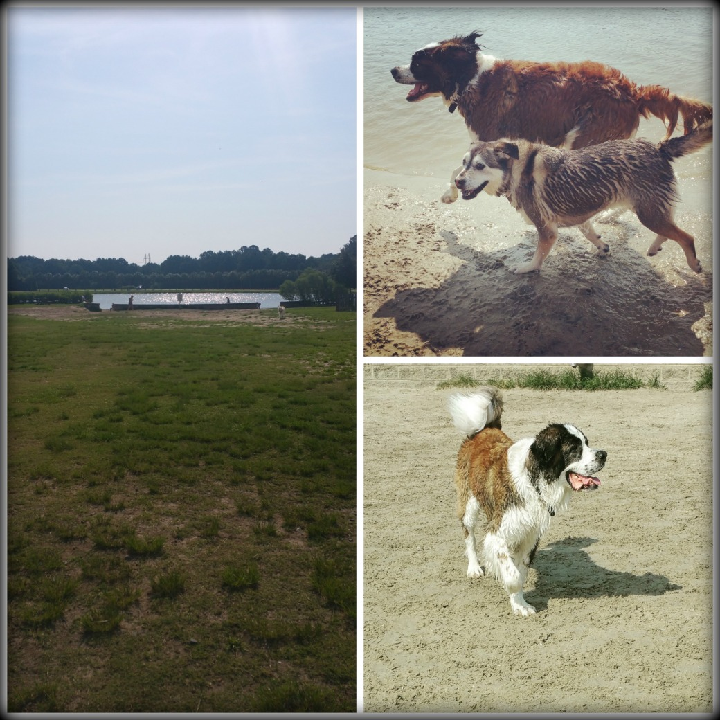 jamesislanddogparkcollage