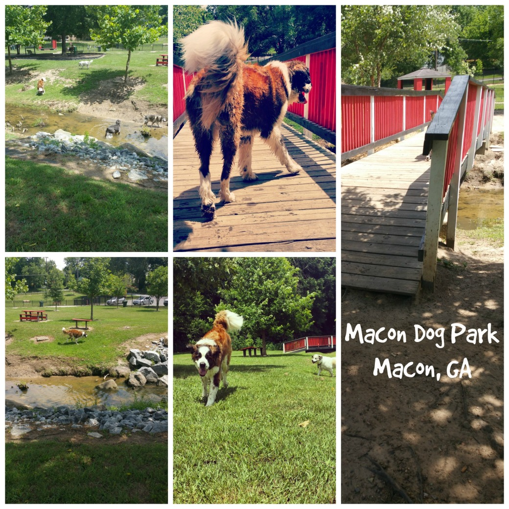 macon dog park