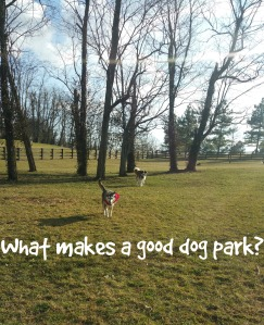 what makes a good dog park
