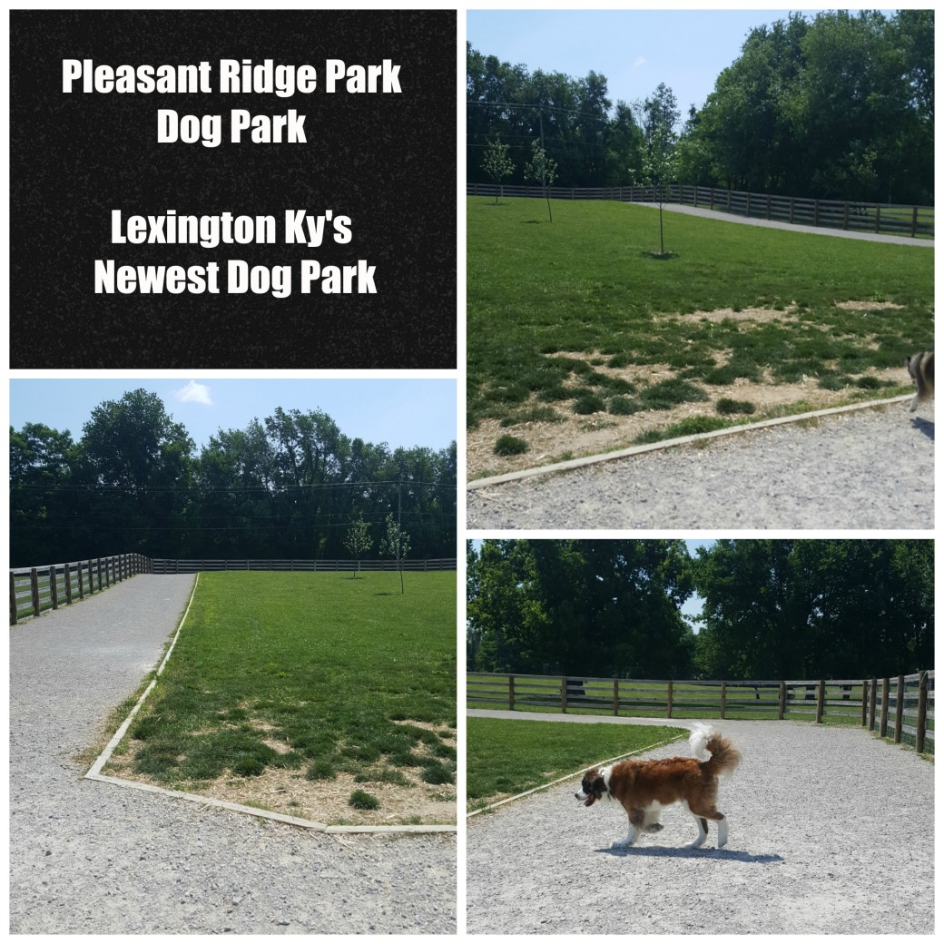 pleasant ridge dog park