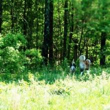 Ossian & Koda #PawNatural at the Farm 2