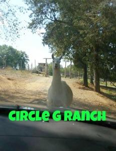 circle-g-ranch