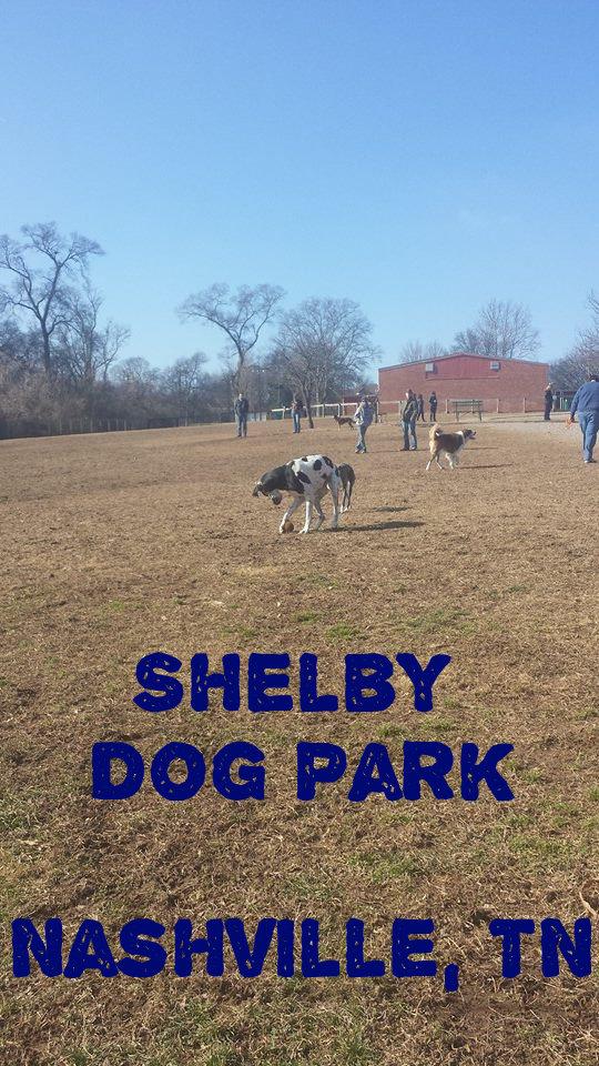 shelby dog park tn