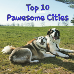 Top 10 Pawsome Cities