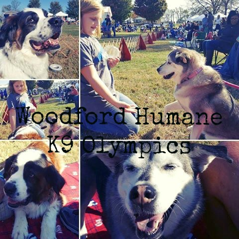 k9-olympics