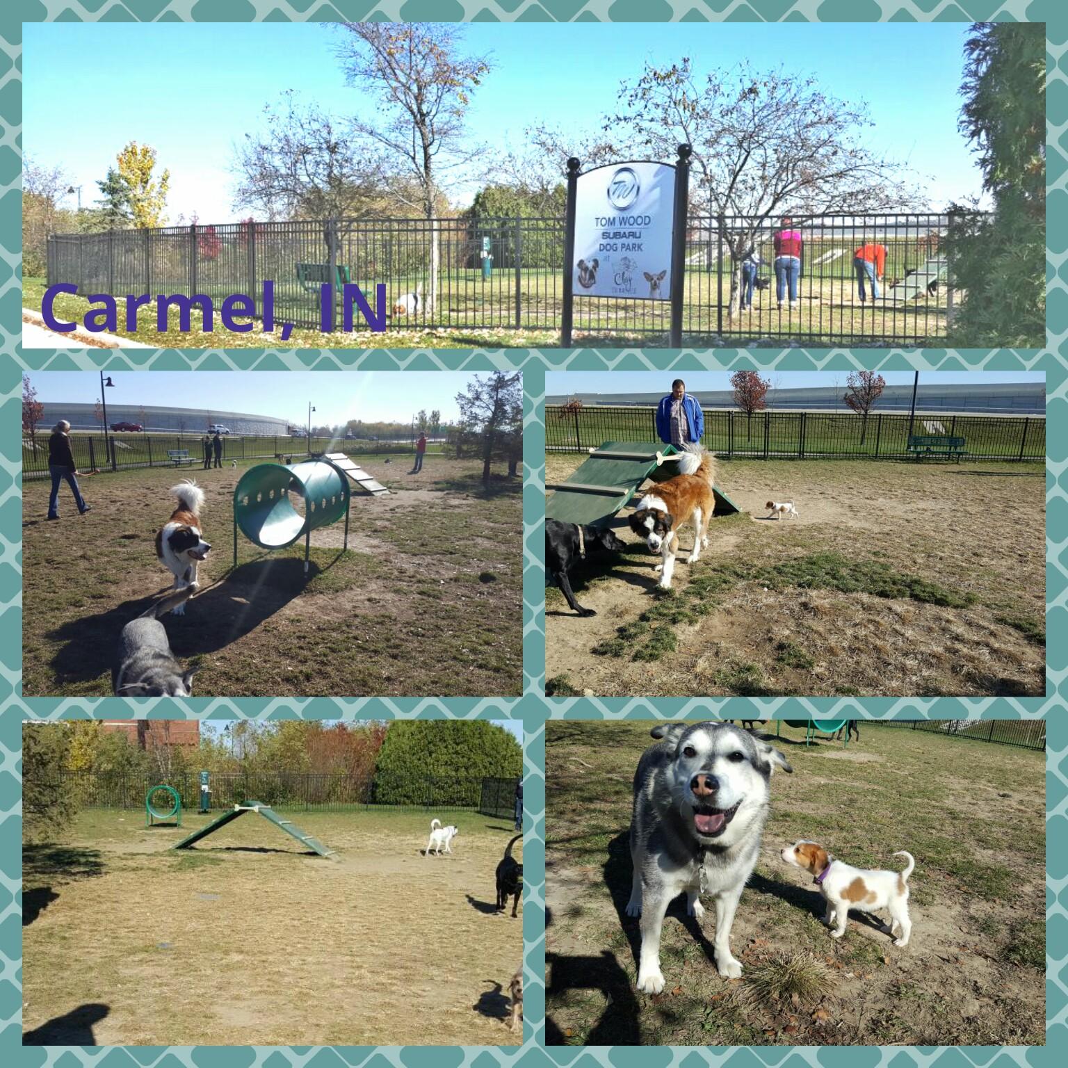Tom wood subaru dog park