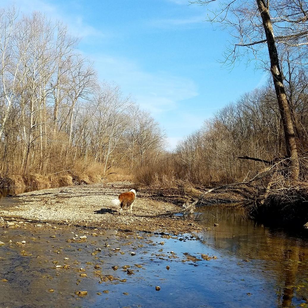 Columbia MO Grindstone nature Area