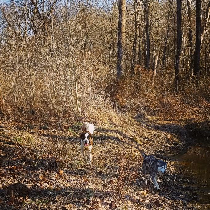 Nature Area Columbia MO